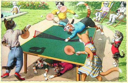 Cat-ping-pong